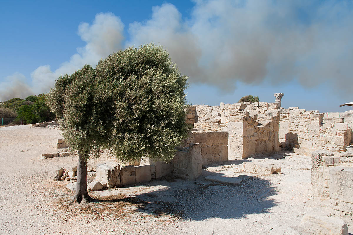 olive tree wind vento albero d'ulivo Kourion Κούριον ancient antica Curias Curium rovine romane greche greek roman ruins cipro cyprus holiday vacanze sea mare Πάφος Pafos Polis