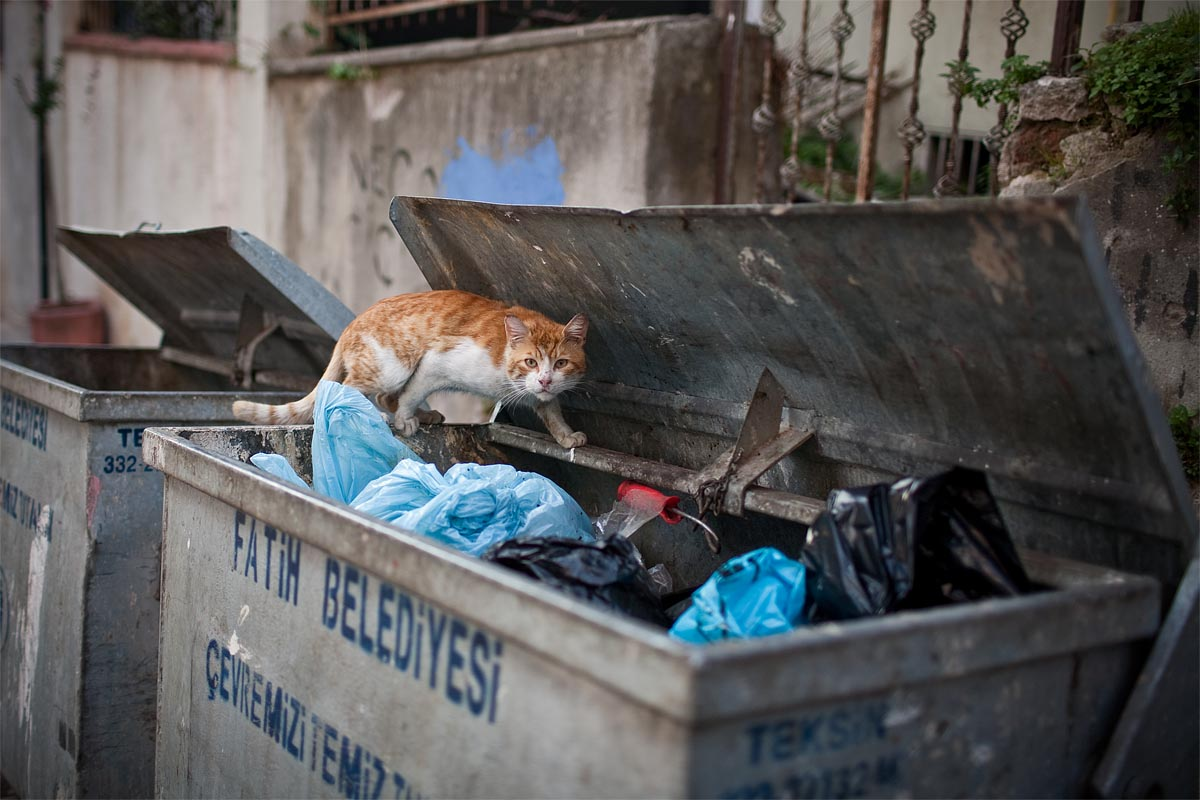 gatto cat spazzatura cassonetto rubbish istanbul instanbul turchia canon 5d 35mm f/1.4 1.4