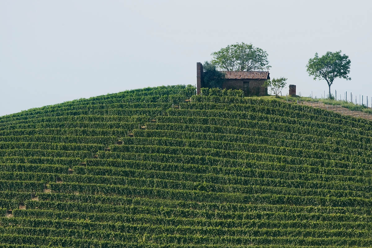 langhe est colline viti casa filari casa hill vineyards